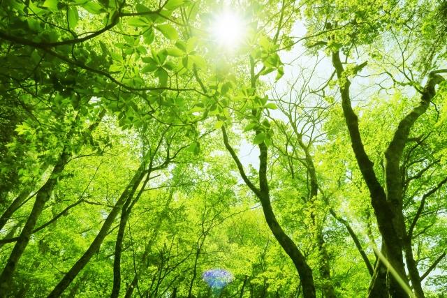 樹木葬の歴史